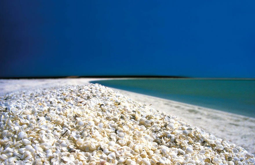 SHELL BEACH aka SHARK BAY in AUSTRALIA
